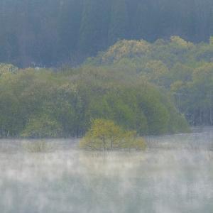 霧の舞 / In the mist flow