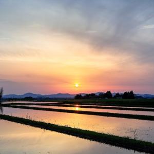 水田の夕暮れ / Dusk in the rice paddies