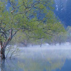朝霧と新緑 / Morning mist and fresh greenery