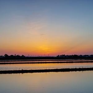 水田に映す夕焼け / Sunset reflected in a paddy field