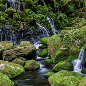 水と緑の楽園 / Water and Green Paradise