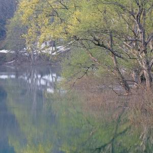 湖水に映す新緑 / Fresh green reflected in the water