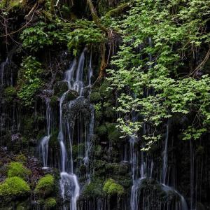 新緑と伏流水 / Fresh leaves and subsoil water