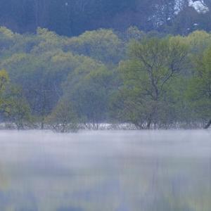 朝霧の囁き / Whisper of the morning mist