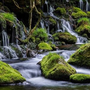 苔と水の楽園 / Paradise of Moss and Water