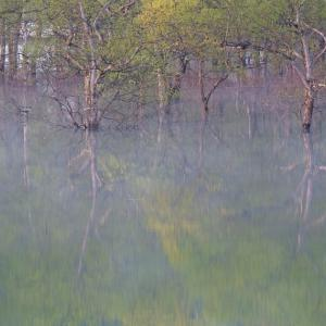 水の森へ / To the Water Forest