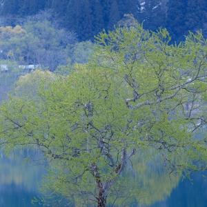 水上に芽吹く / New greenery on the water