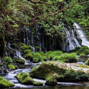 緑育む伏流水 / Fresh greenery and underground water
