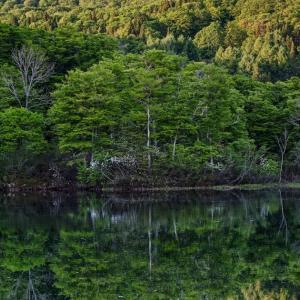春を謳歌する地蔵沼 / Jizo-numa in Spring