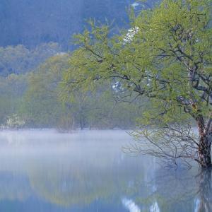 揺蕩う朝霧に萌ゆる / Submerged forest in fresh green