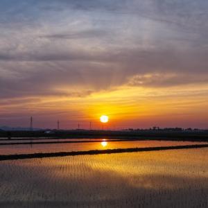 水田の夕焼け / Sunset in the Paddy Fields