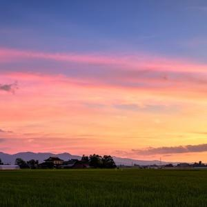 懐かしさを運ぶのは / Summer scenery at a rice field