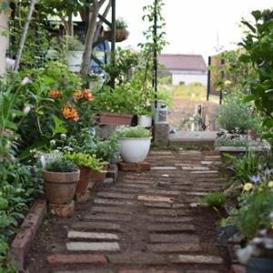 また庭の模様替えをしました。