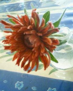 ルドベキア・キャラメルが咲きました♪