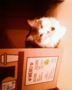 我が家の猫カフェ(段ボール製)・店長マロン