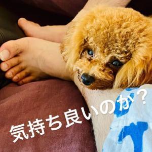 コーチと選手〜ステファンと満知子先生/アスリートの足・!?今朝の筋肉枕