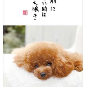 可愛すぎる♡直筆川柳?!トロ&エマカレンダーとMIZUNO強火キャンペーン