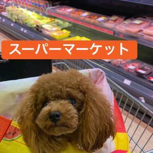 後輩達の頑張り/全日本ジュニア女子SP/スイスでの買い物〜昌磨チャンネル
