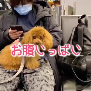 トロちゃんと帰国へ〜UNOワンちゃんネル