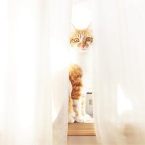 猫も人間もゴロゴロ中・・・