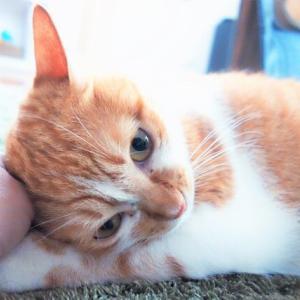 甘えん坊でかわいい猫の裏の顔