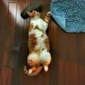 スリッパと戯れる猫