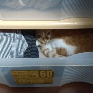 リアル猫じゃらしで遊ぶ