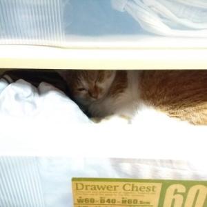 またここで寝ている
