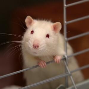 「ネズミが逃げた!!」🐀