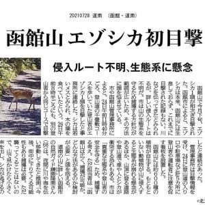 函館山でエゾシカが闊歩!