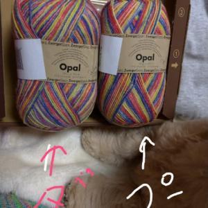 毛糸で、ダックスで?