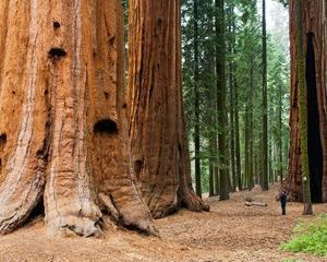 山は巨大な木だった説!地球の本当のこと?
