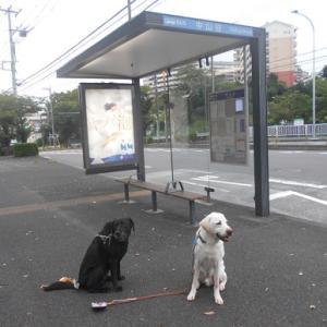 昭和大学の近くで散歩