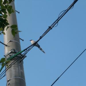 この鳥の名前は!