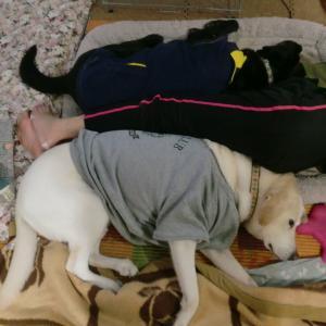 ワンと啼かない犬たち