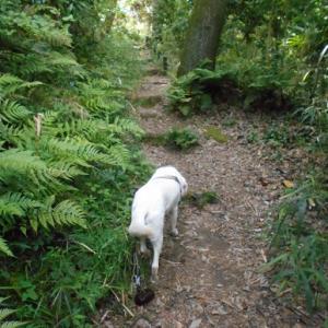 木漏れ日の中の散歩とカエルさん