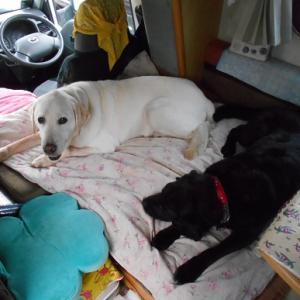 キャンピンクカーと犬たち