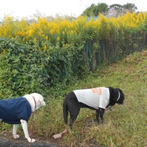 秋の畑散歩
