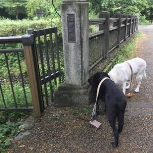 梅田川橋とくるみ橋