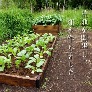Vlog【休業から自給自足へ】ひとりで荒地を開墾!美味しいオーガニック野菜を育てるためのベジパッチ作りから収穫まで