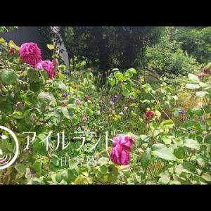 ローズガーデン(前編)|手作りのウッドチップで畑に小道作り|パーマカルチャーや自然農の可能性<Vlog_46>