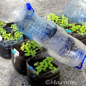 【エコ菜園】ペットボトルのゴミで0円から始められるオーガニック野菜!
