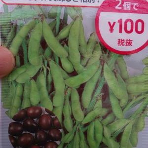 枝豆(茶豆)収穫 ダイソー