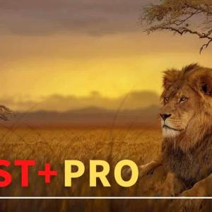 Beast+Pro公開!レバレッジ1111倍に対応したBEAST+