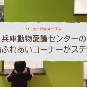 兵庫県動物愛護センターリニューアルオープン!猫ふれあいコーナーが最高