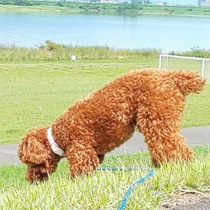犬の上手な飼い方に!犬に愛される人の特徴をご紹介します!