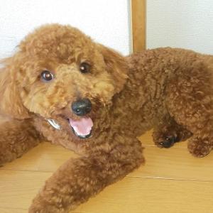 老犬ホームという選択肢もあり?犬の老人ホームともいわれるサービスや料金について詳しくご紹介します!