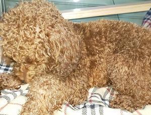 「犬の飼い方」普段から愛犬の状態を確認!体のチェック項目をご紹介します。