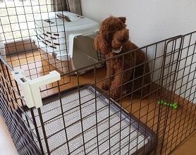 犬のトイレトレーの選び方!大きいサイズではみ出し防止!