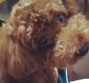 愛犬が「他人と飼い主を見分ける方法」を4つご紹介します。